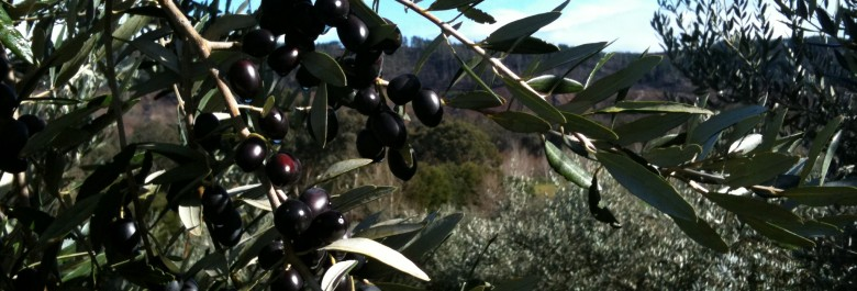 Olive Oil in WA